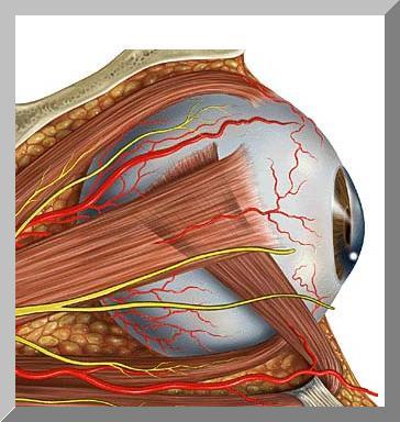 Зрение плохое как улучшить зрение при